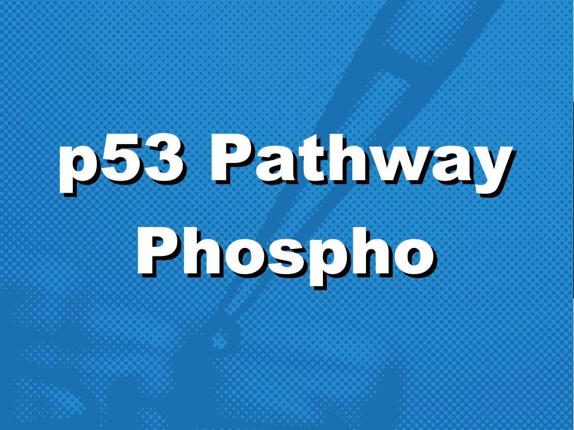 p53通路蛋白质磷酸化检测抗体芯片(pft196)